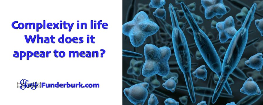 Complexity in life - if life appears to have been designed with a purpose, why not follow that and see where it goes?