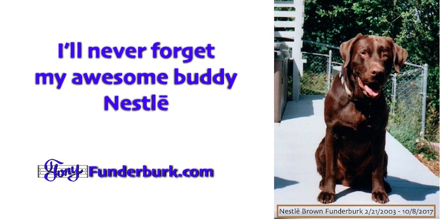 Gotta love a lab like Nestle
