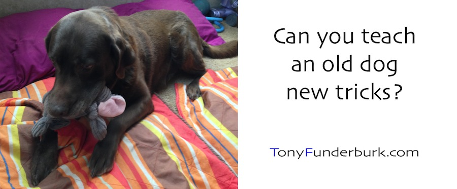 Can You Teach Old Dog New Tricks