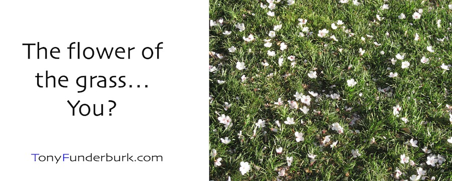 The flower of the Grass